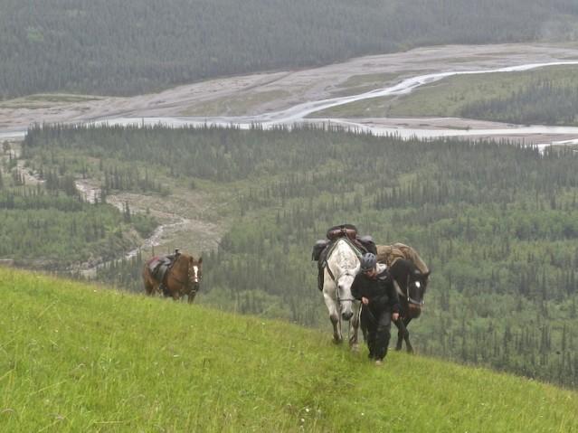 Horses in the Muskwa Kechika
